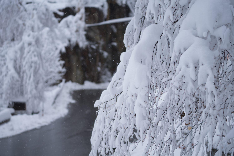 Sneeuwupdate